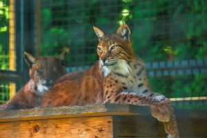 Hotel- und Ferienkomplex Karpaty Zoo